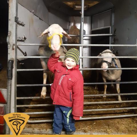 Statek Horní Dvorce: ovčí farma